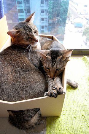 pratici-e-comodi-modi-per-riposare-in-una-scatola-gatto13