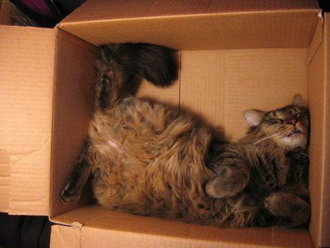 pratici-e-comodi-modi-per-riposare-in-una-scatola-gatto16