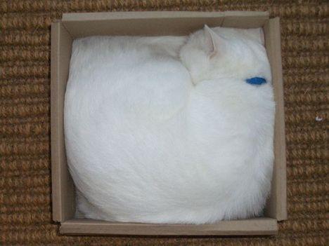 pratici-e-comodi-modi-per-riposare-in-una-scatola-gatto17