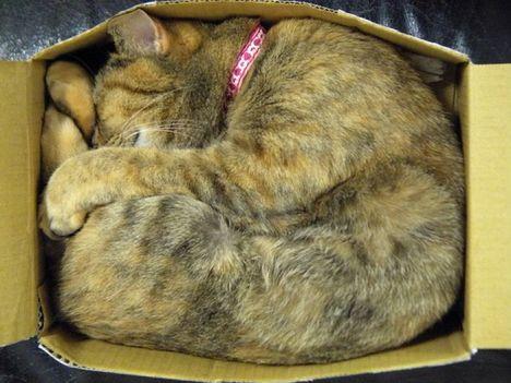 pratici-e-comodi-modi-per-riposare-in-una-scatola-gatto18