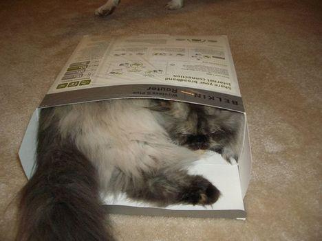pratici-e-comodi-modi-per-riposare-in-una-scatola-gatto19