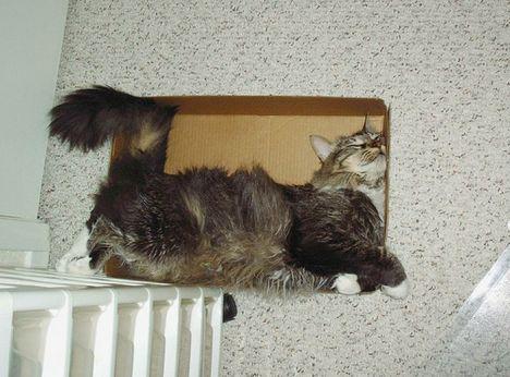 pratici-e-comodi-modi-per-riposare-in-una-scatola-gatto2