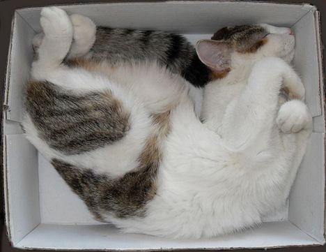 pratici-e-comodi-modi-per-riposare-in-una-scatola-gatto20