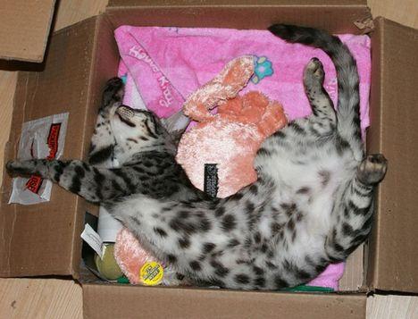 pratici-e-comodi-modi-per-riposare-in-una-scatola-gatto21