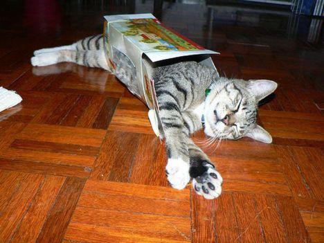 pratici-e-comodi-modi-per-riposare-in-una-scatola-gatto23