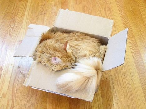 pratici-e-comodi-modi-per-riposare-in-una-scatola-gatto3