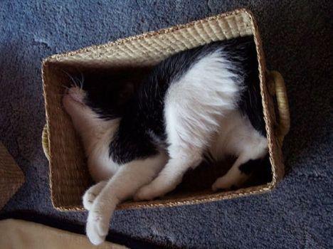 pratici-e-comodi-modi-per-riposare-in-una-scatola-gatto5