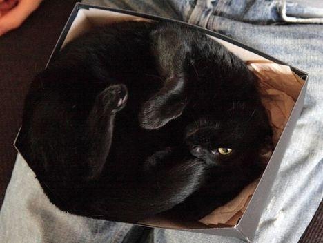 pratici-e-comodi-modi-per-riposare-in-una-scatola-gatto9