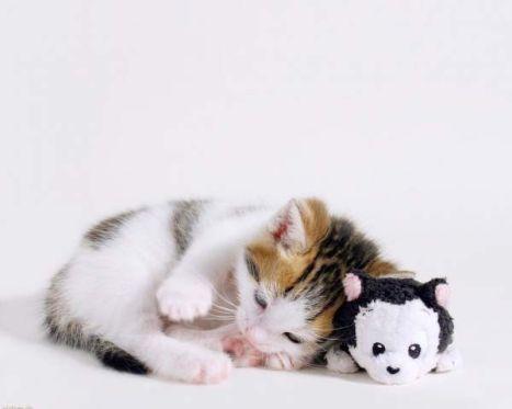 001_kitty