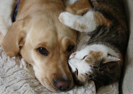 cane e gatto farli conoscere