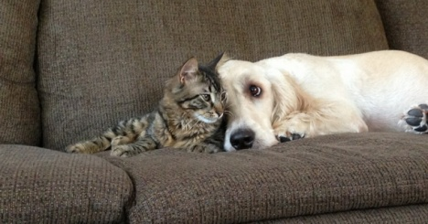 cane e gatto su divano