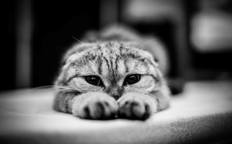 cat-animals-monochrome-photography-1920x1200