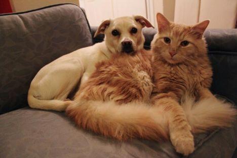 come-rendere-piu-lunga-vita-cani-gatti