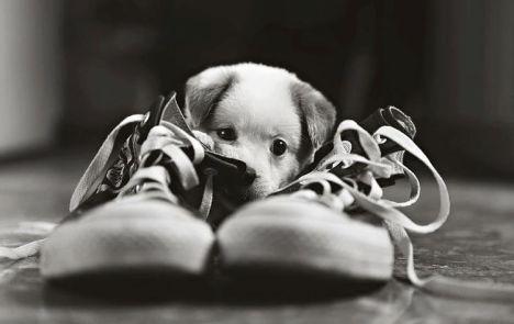 cucciolo-cane-foto-bianco-nero