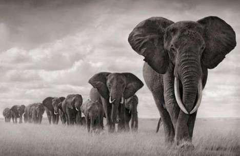 elefanti-in-cammino