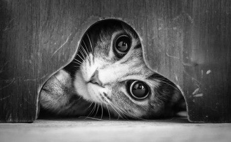 gatti-bianco-nero-016