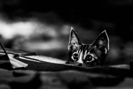 gatti-in-bianco-e-nero-1-578339