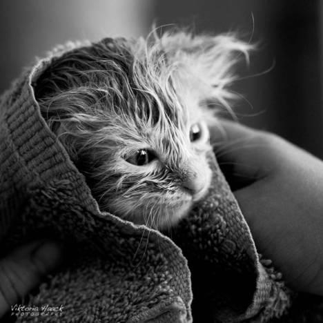 gatti-in-bianco-e-nero-8-578351