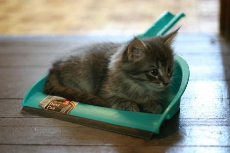 gattino nella paletta