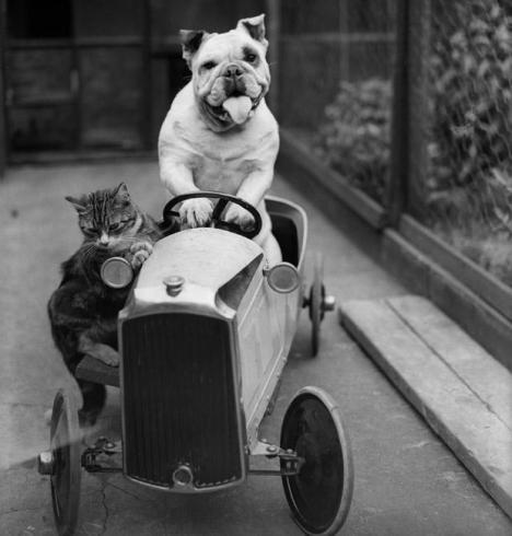Vintage-Photos-of-Animals-Acting-Like-People-15