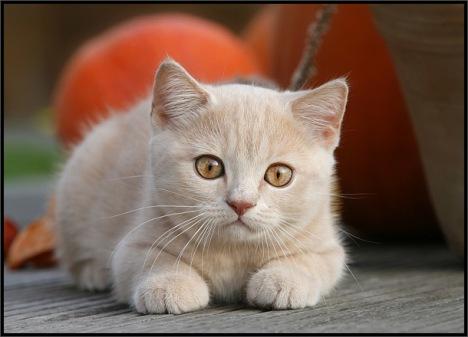 cats-017