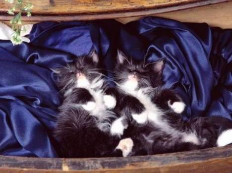 cats-021