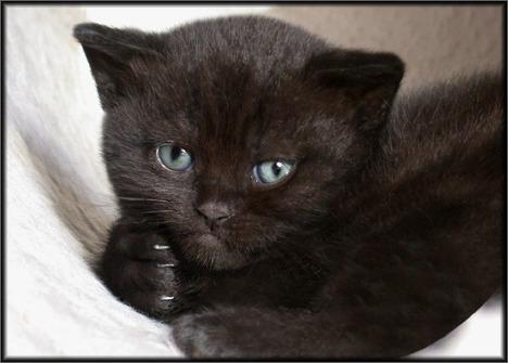 cats-047