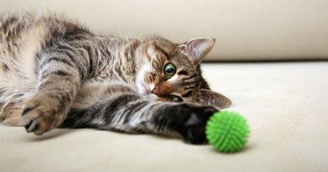 gatto-gioca.jpg