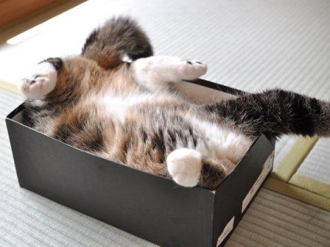 scatolagatto.jpg