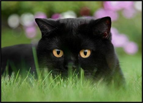 cats-030