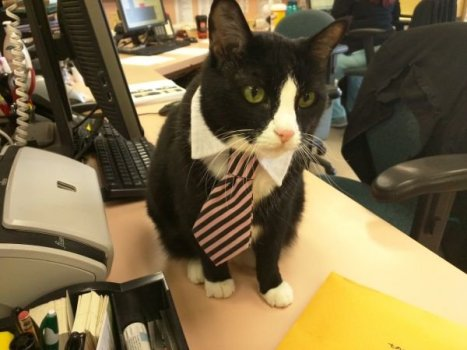cats-in-business-attire-20-photos-21