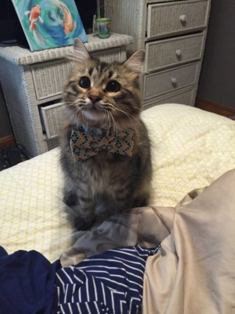 cats-in-business-attire-20-photos-210