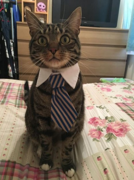 cats-in-business-attire-20-photos-215