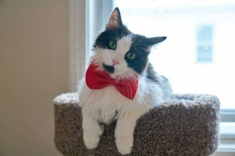 cats-in-business-attire-20-photos-219