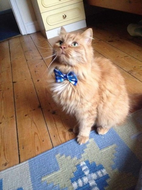 cats-in-business-attire-20-photos-22