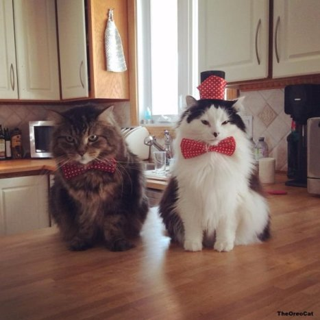 cats-in-business-attire-20-photos-24