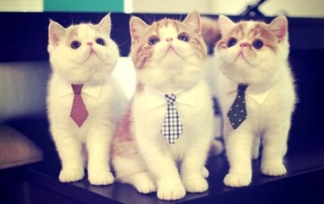 cats-in-business-attire-20-photos-25