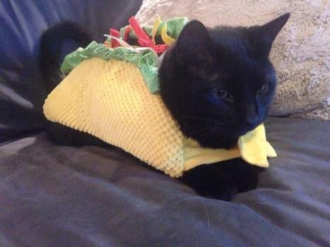 carnevale-gatto-tacos