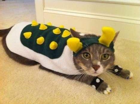 gatto-mascherato