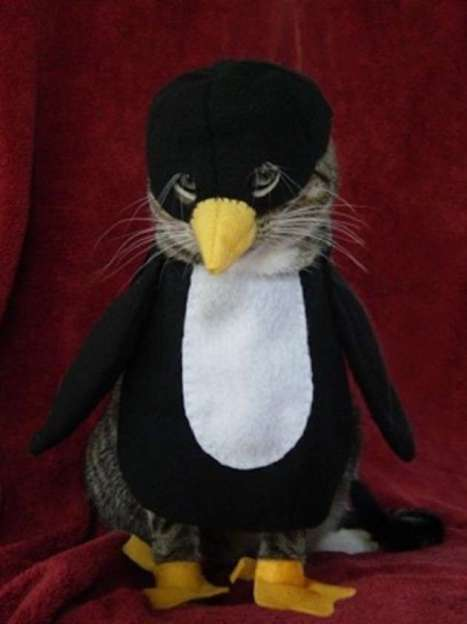gatto-pinguino