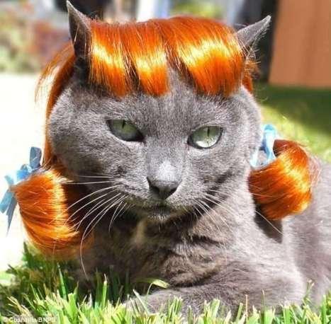 parrucca-felina