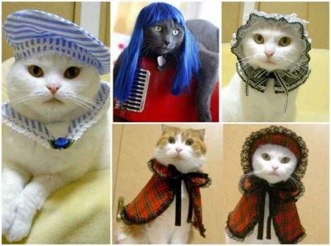 travestimenti-felini