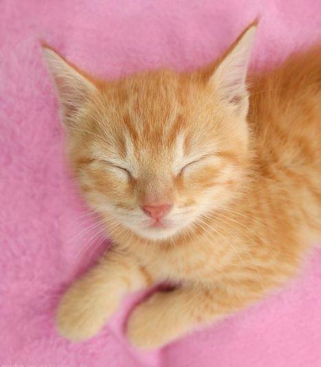 015_kitty