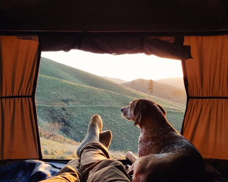 camping-with-dog-4__605
