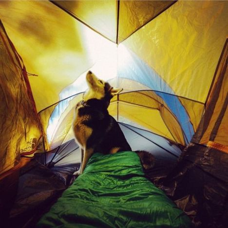 camping-with-dog-ryan-carter-27__605