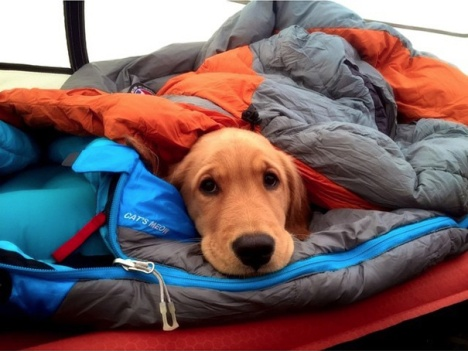 camping-with-dog-ryan-carter-54__605
