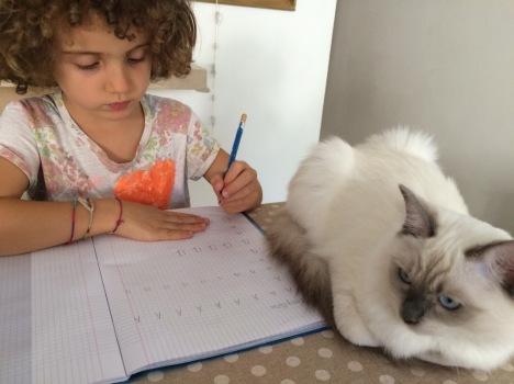 gatti-ragdoll-e-bambini-2