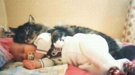 gatto-abbraccia-bimbo