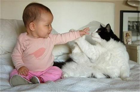 gatto-bambino-high-five