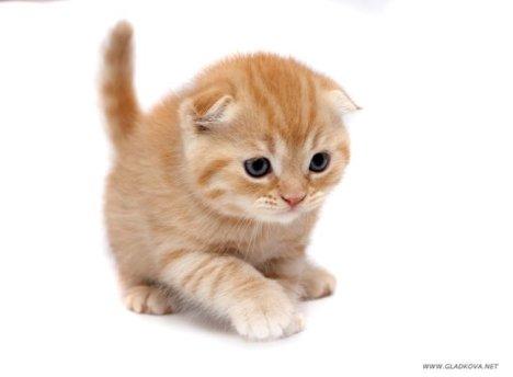 005_cats